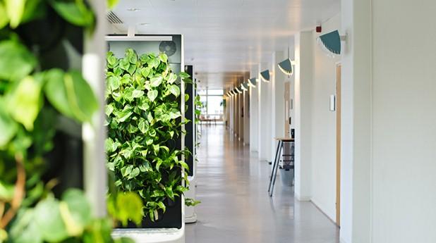 Växtväggarna Naava i en skolkorridor