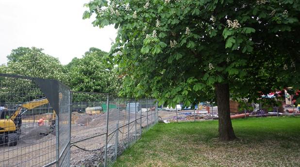 Träd vid byggarbetsplats