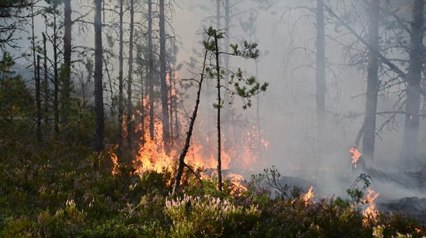 brand-i-skogen