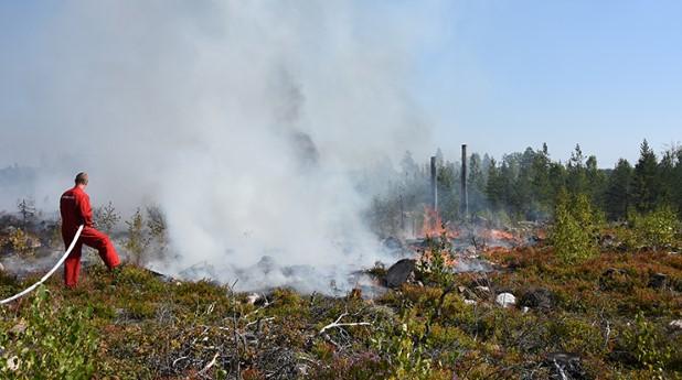 skogsbrand_webb