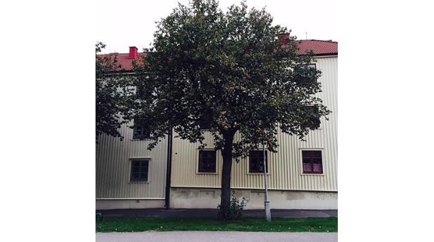 fasad-majorna