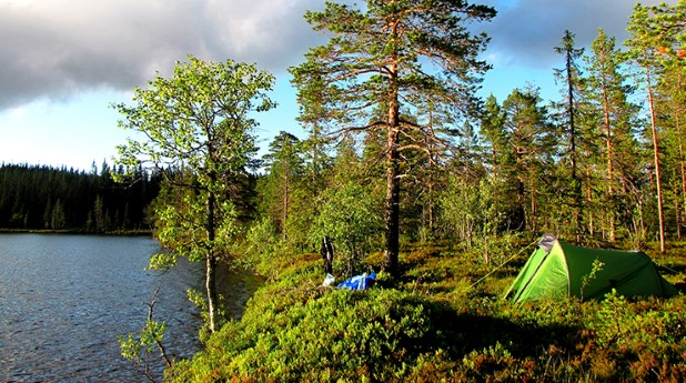 huvudbild_skogen