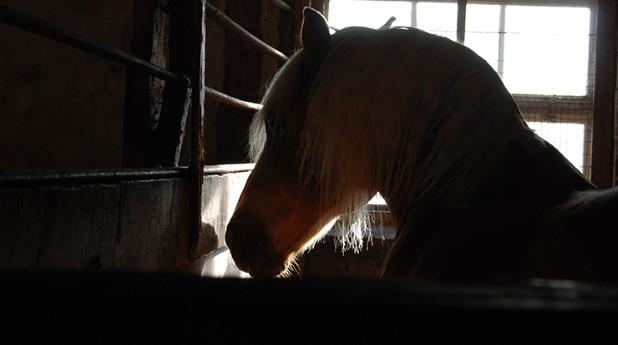 horse_webb