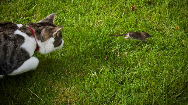 824223-cat-and-mouse