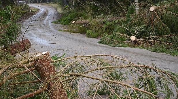 Omkullblåsta träd