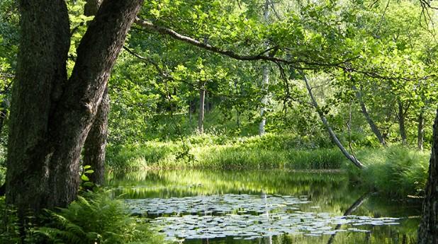 1245231-boulognerskogen-gavle
