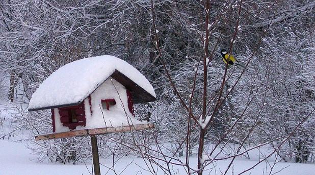 Fågelbord, snö