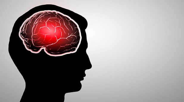 Illustration av hjärna i huvudet_sergey-nivens