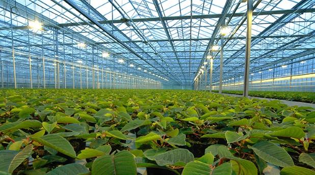 Växthus med artificiell belysning